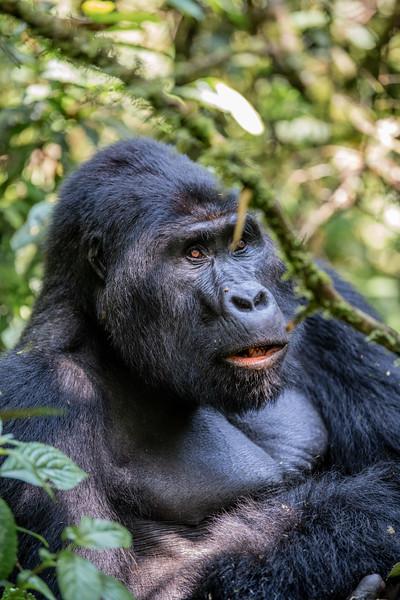 Uganda_T_Gor-318.jpg