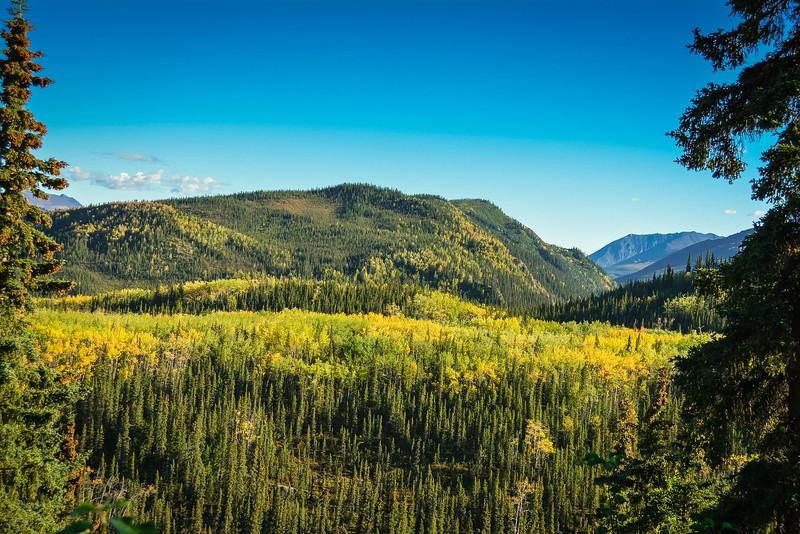 Denali-National-Park-37.jpg