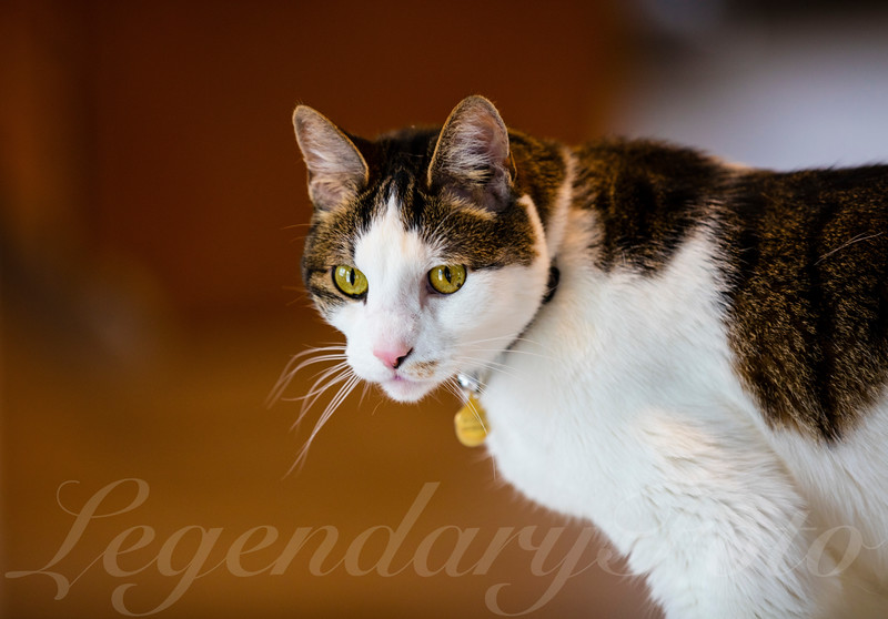Cats_Bugatti_0.jpg