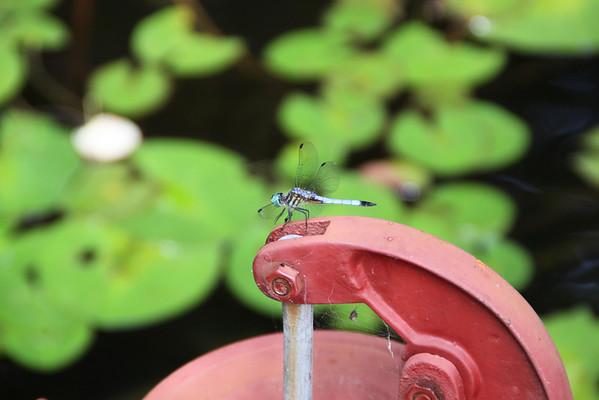 Dragonfly-2010