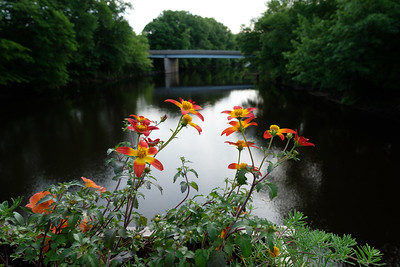 Flower Bridge_June 8, 2018