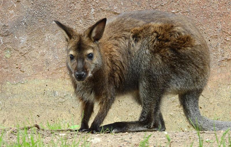 Cheyenne Mtn Zoo 2019 (1033).JPG