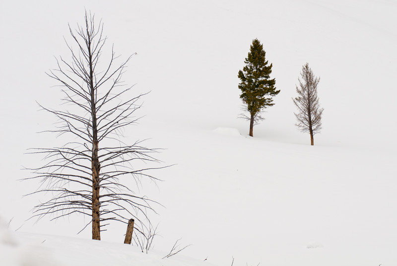 Winter Sticks 5