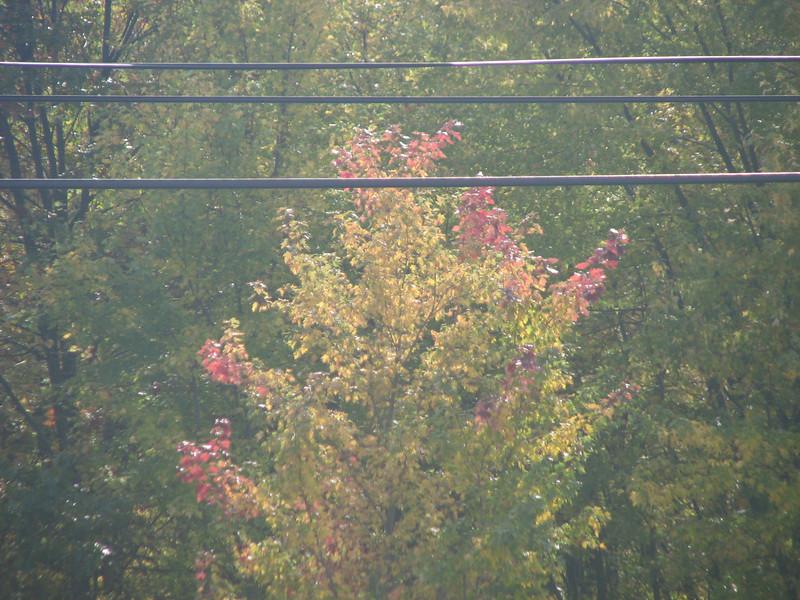 Fall pics 2008 024.jpg