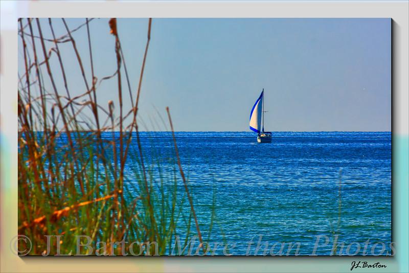 Gulf Cruising As seen near Englewood, Florida, USA