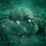 Diving - Grandview