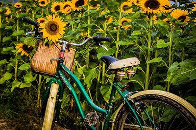 Sunflower with Bicycle