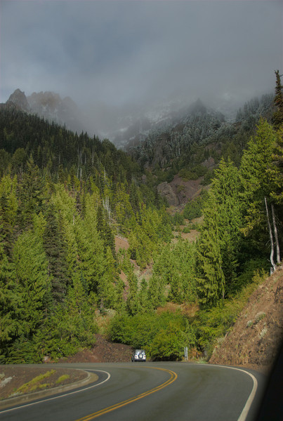Forest Road in Olympic National Park in Washington