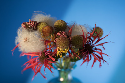 Flower Seedheads 8.17.18