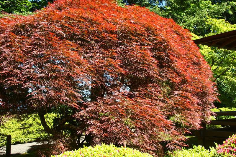 Portland Japanese Garden 6-3-11  1786.jpg