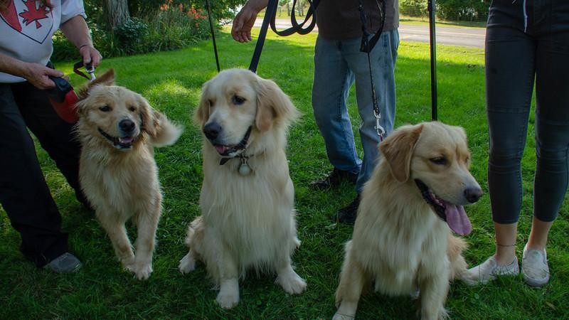 PuppyParty18-572.jpg