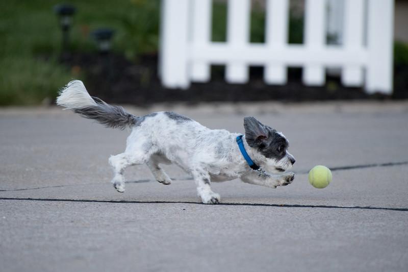 LuLu - Brady - Cooper Play Friends (51 of 109).jpg