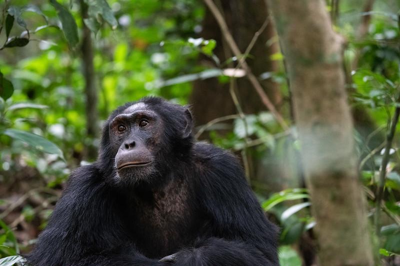 Uganda_T_Chimps-825.jpg