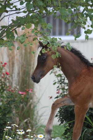 Bay Foal Day 1