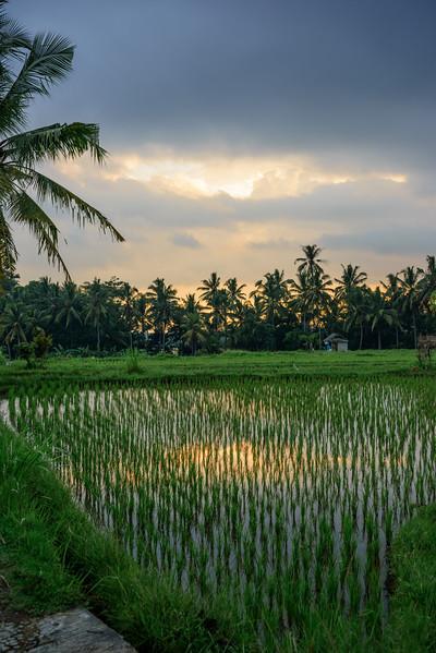 160219 - Bali - 3054.jpg