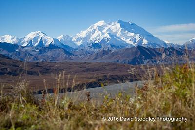 Denali National Park Scenery