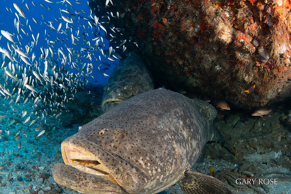 Other Creatures and Aquatic Vistas