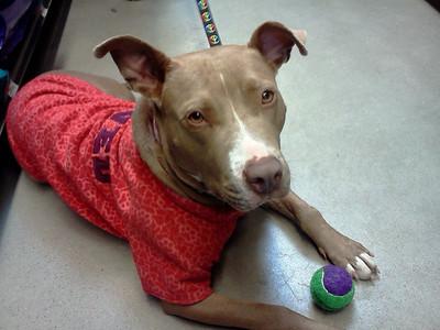 Friends of Peaceworks Animal Sanctuary - Meet Jolie