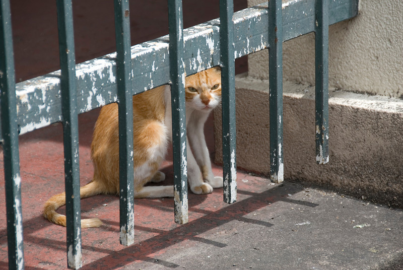 Grumpy cat inside a fence in George Town, Penang, Malaysia