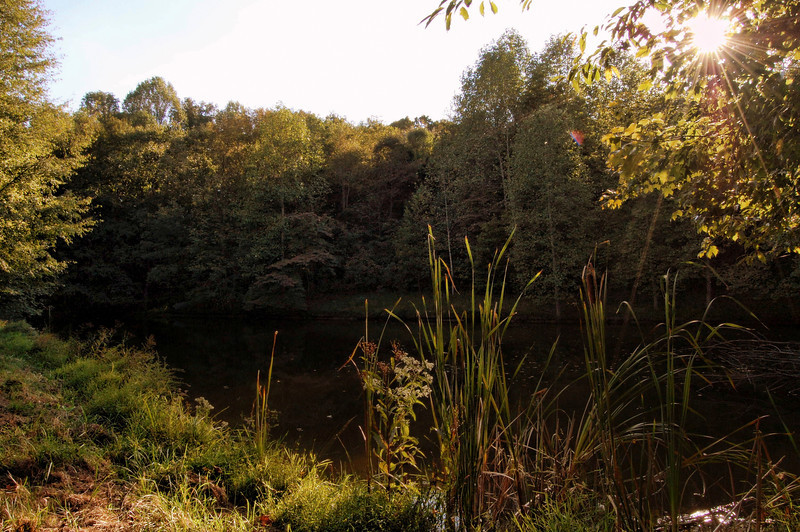Afternoon fall pond in Nobob, KY