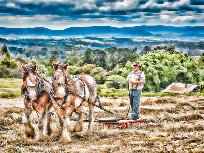Working Horses at Mont De Lancey Homestead, Victoria