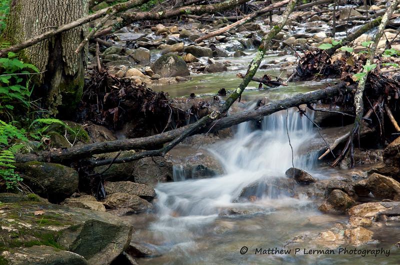 30 Scenic Forest stream 06 06 12_3692.jpg