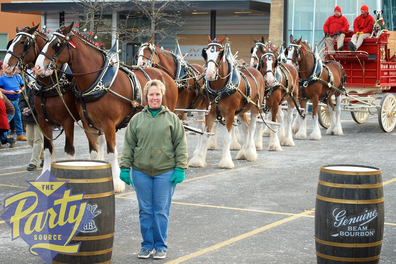 Clydesdale Portraits 187.jpg