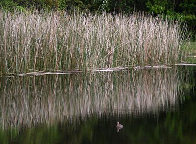 Florida 2010 - Flora & Fauna