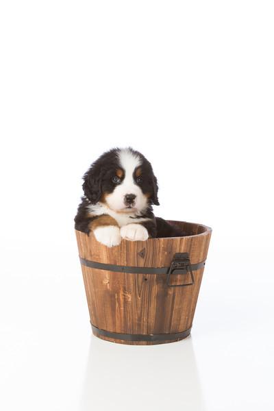 2013-Pearson Pups-Jun02-0437.jpg