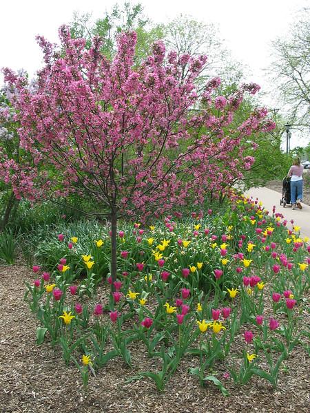 Lilacs & tulips