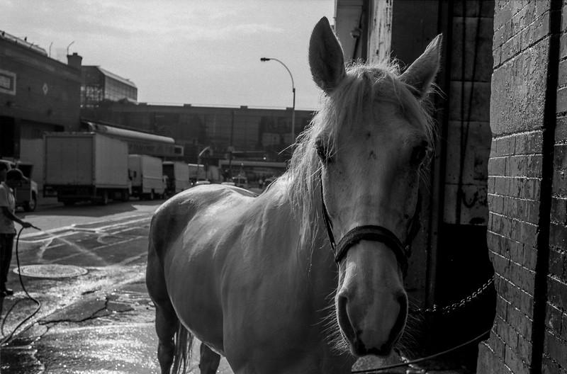White-Horse-3.jpg