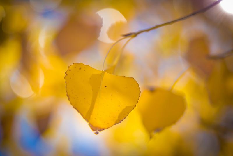 20151024-Fall Colors-109.jpg