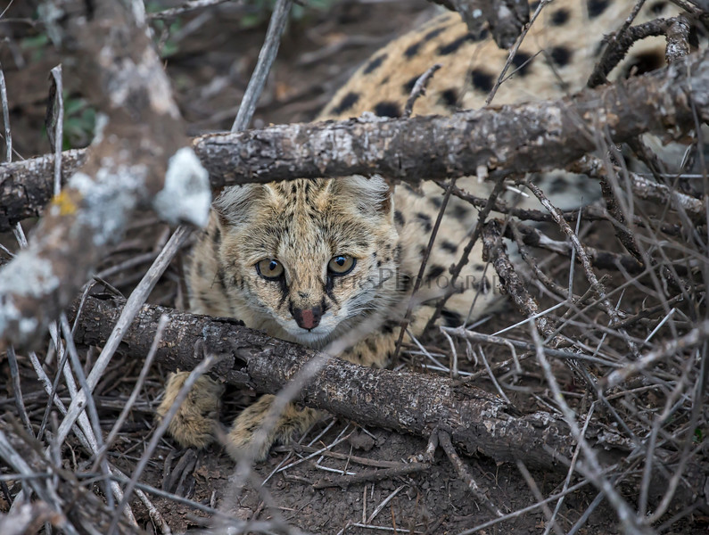 At Your Serval
