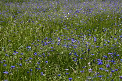 Kyndel Spring Wild Flowers 2010