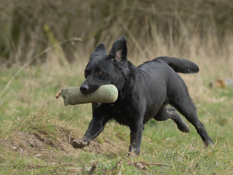 Dogs-5287.jpg