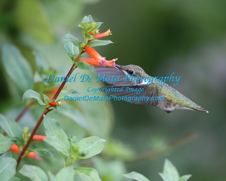 Baiting Hollow Humming Bird Sanctuary photos