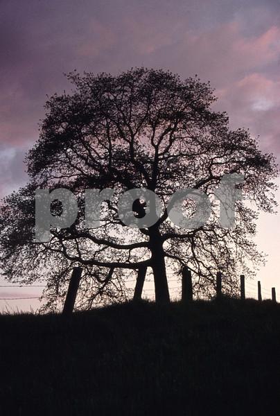 Oak Ruddel Rd 91.06.02b May 1977.jpg