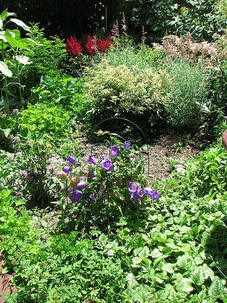 garden-2007-06-0612_std.jpg