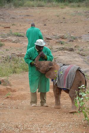 Elefant Børnehjemmet Nairobi