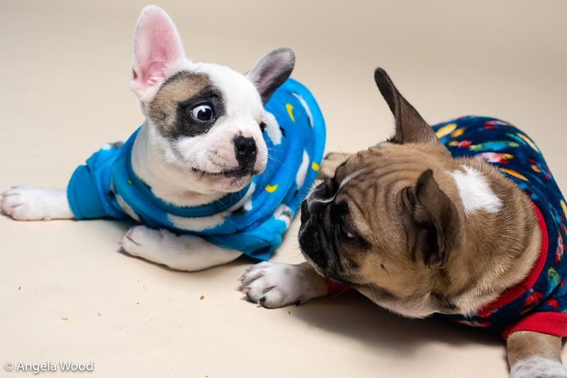 Puppies50.jpg