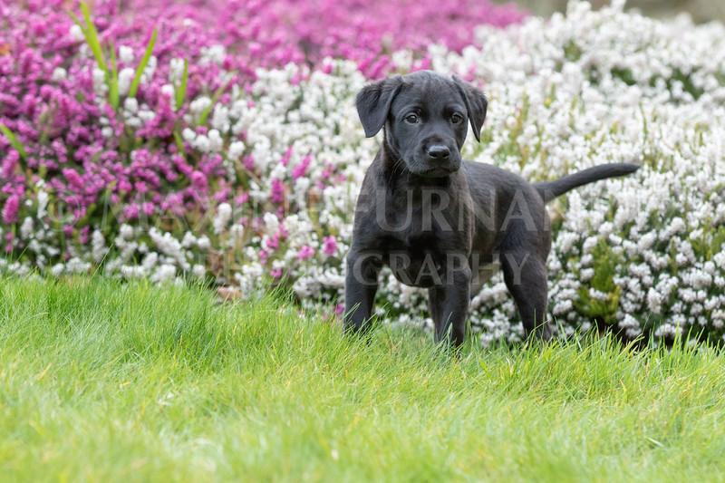 Weika Puppies 24 March 2019-6463.jpg