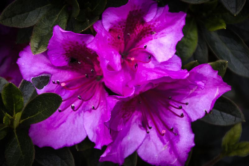 February 18 - Flower.jpg