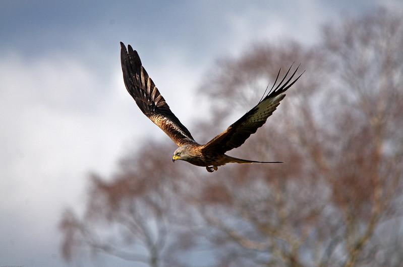 Kite Flying 5669.jpg