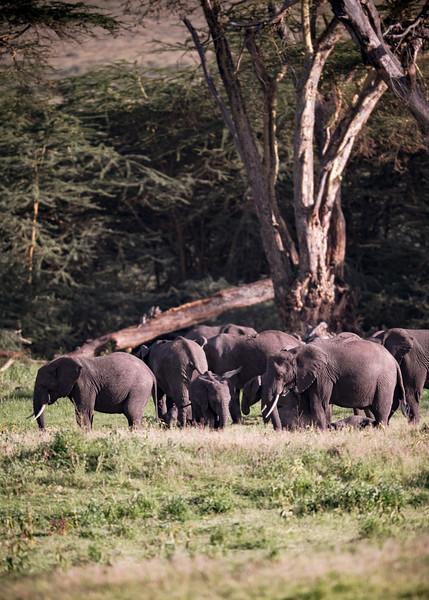 Tanzania_Feb_2018-37-2.jpg