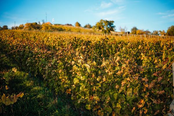 Vinarstvi Knezi Hora :: vinohrady 2019