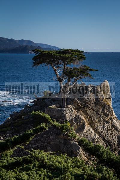 Monterey #2