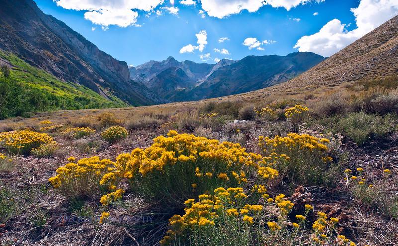 Vista Rock Creek.jpg