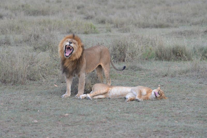 East Africa Safari 288.jpg