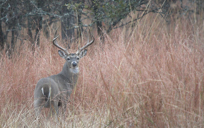 Whitetail Season 2007 - Stonewall, Texas