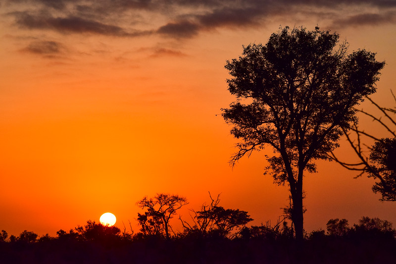 Distant Sunset With Tree Silhouette